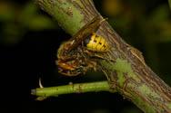 Insekten - Sechsbeinige Killer